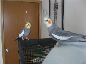Birds 002